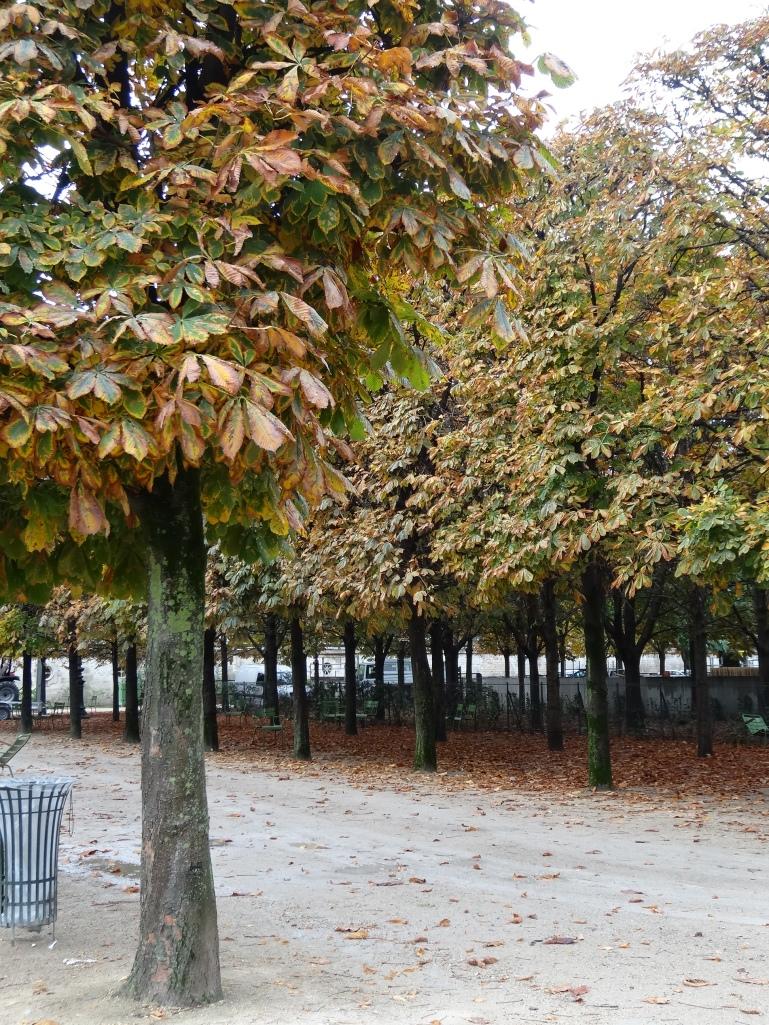 Pleached horsechestnut allee, Tuileries gardens, Paris.