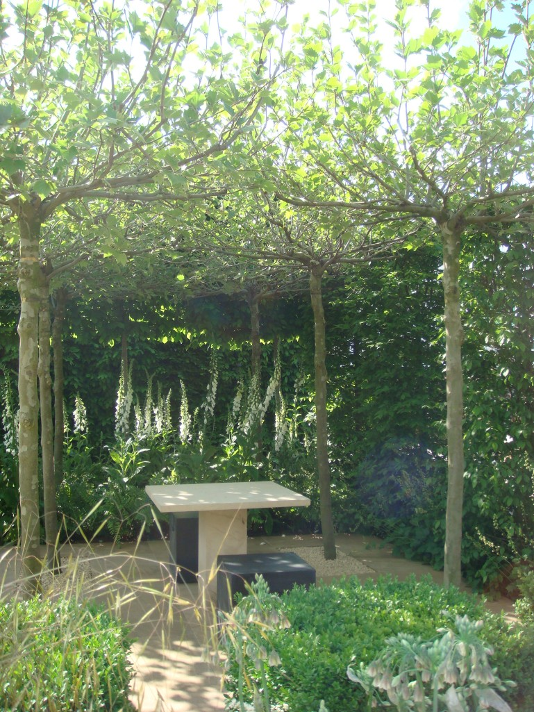 Trees pleached into a shade umbrella.