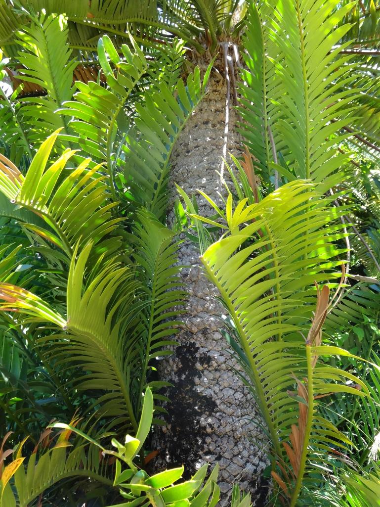 Jurassic plants - photo#13