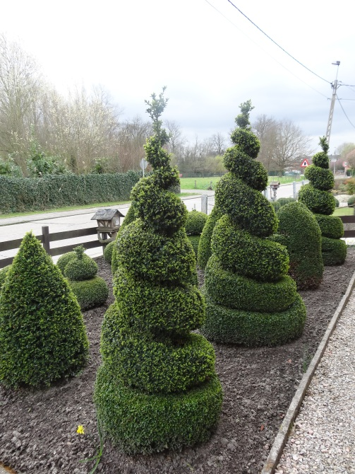 Topiary spirals in a front garden