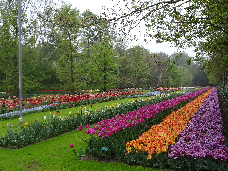 Is this the ultimate flower garden keukenhof 2014 jardin for Jardin keukenhof
