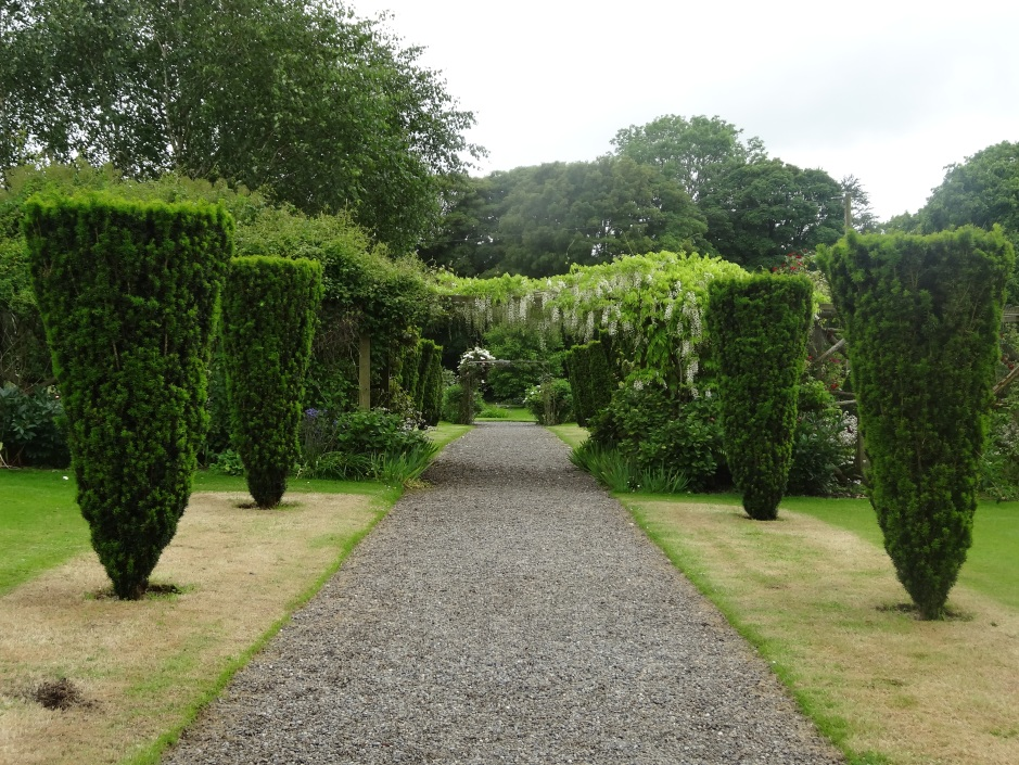 Burtown House, the Yew garden