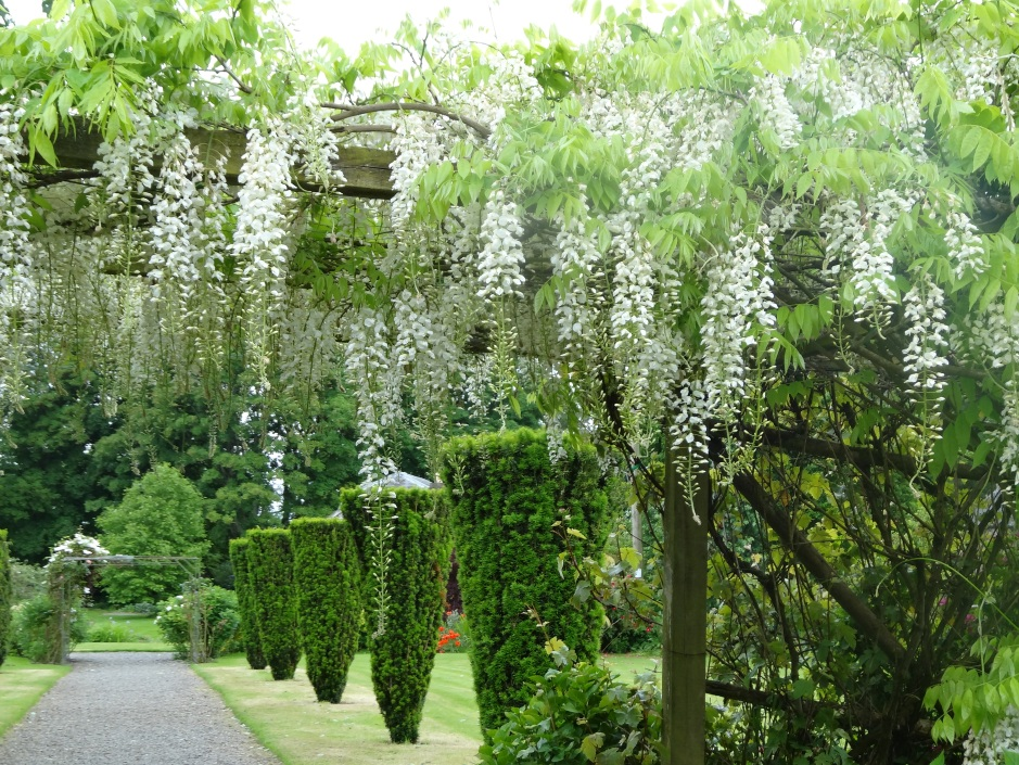 Wisteria, Burtown House