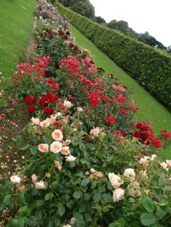 Dublin Rose Festival 2014 066