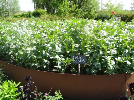 Field beans Jordans Holmes Mill