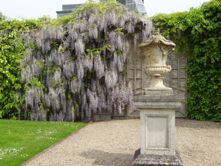 Wisteria and urn, Royal Hospital Kilmainham