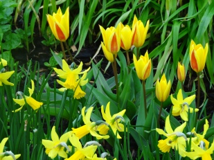 Spring flowers, Ardgillan Castle