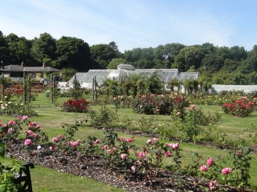 The Rose Garden at Ardgillan