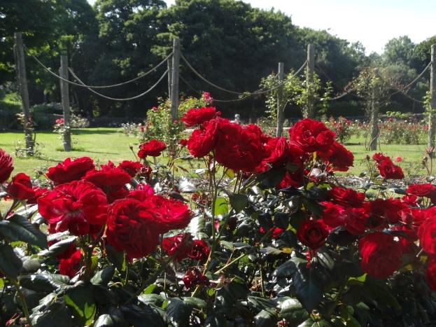 Ardgillan Castle - Rosa Deep Secret