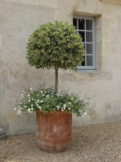 French terracotta pot