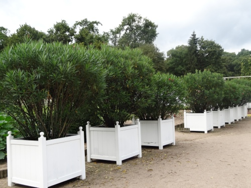 Versailles tubs or planters