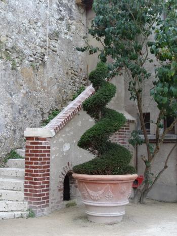 Topiary in terracotta pot