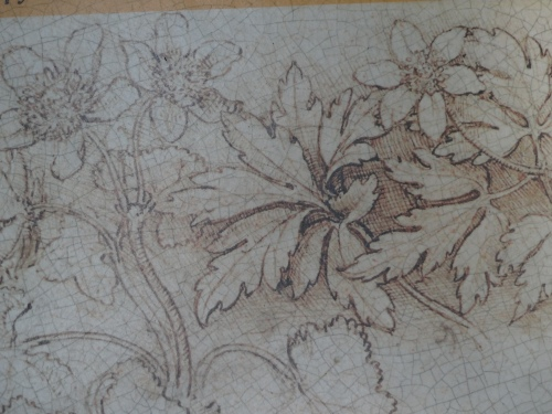 Botanical sketch by da Vinci
