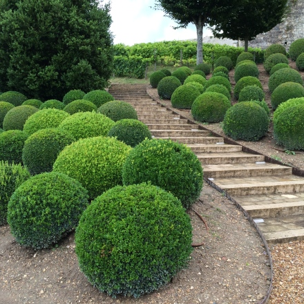 Structure and formality in a modern garden using box balls