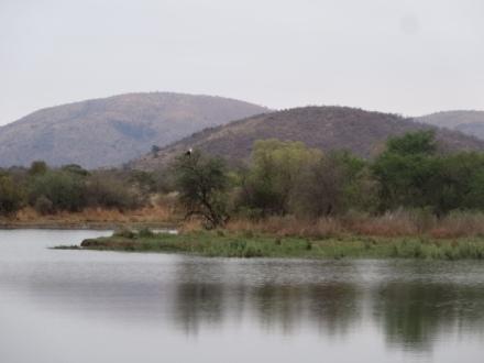 Fish eagle on the Mankwe Dam