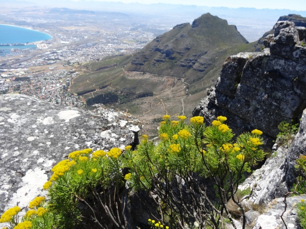 Looking down at Cape Town from Table Mountain