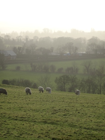 Co Meath from the Hill of Tara