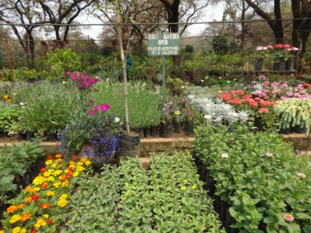 garden centre Lilongwe