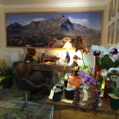 Botanist's study, World Orchid Show, Johannesburg