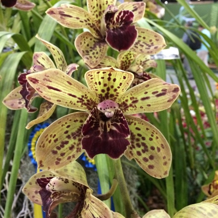 World Orchid Show 2014