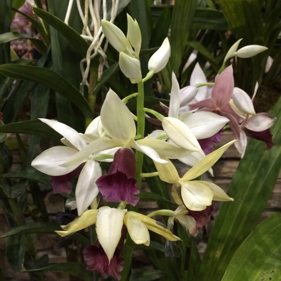 World Orchid show