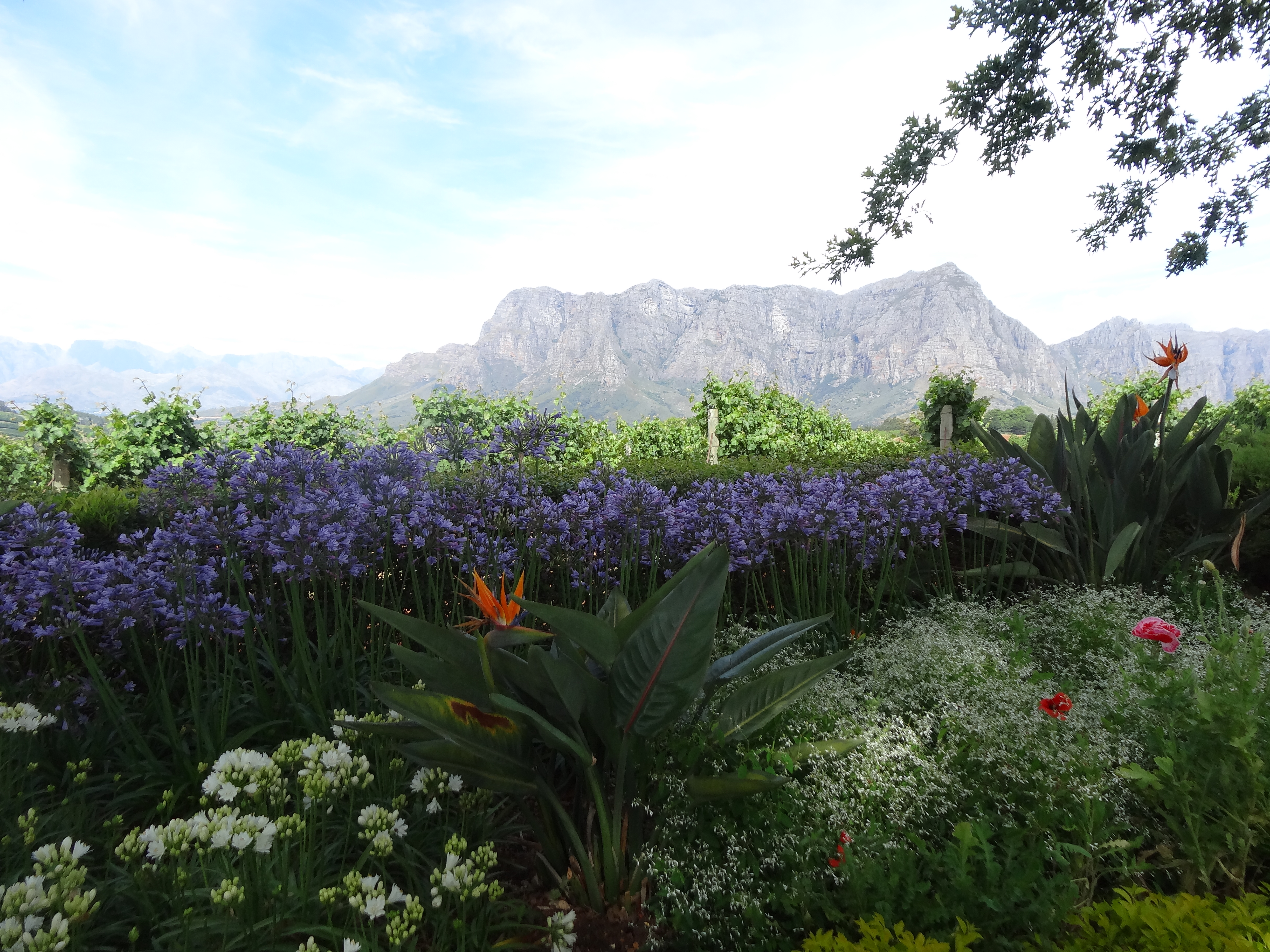 Delaire graff a stunning wine estate garden jardin for Jardin winery