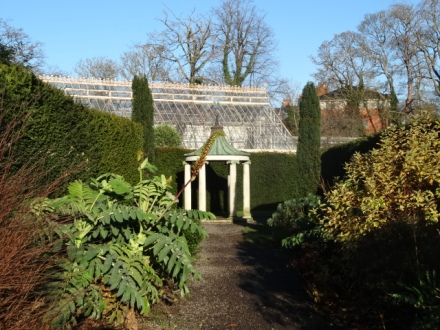 The yew-hedged walk, with Melianthus major, leading to the Stone temple in the walled garden.
