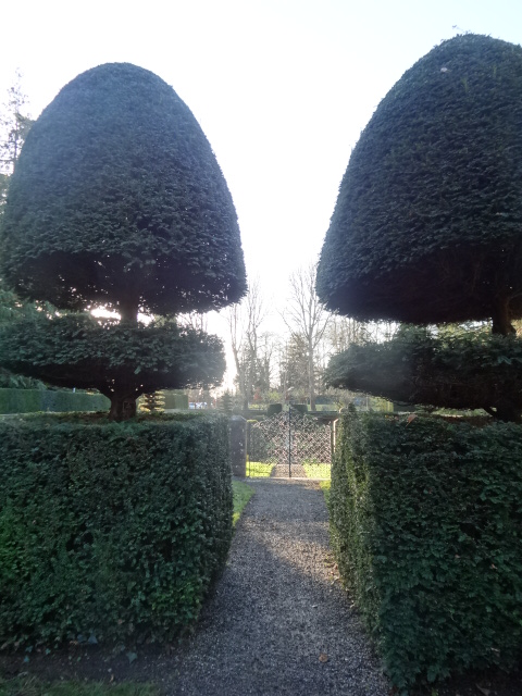 Yew spiral topiary, Farmleigh