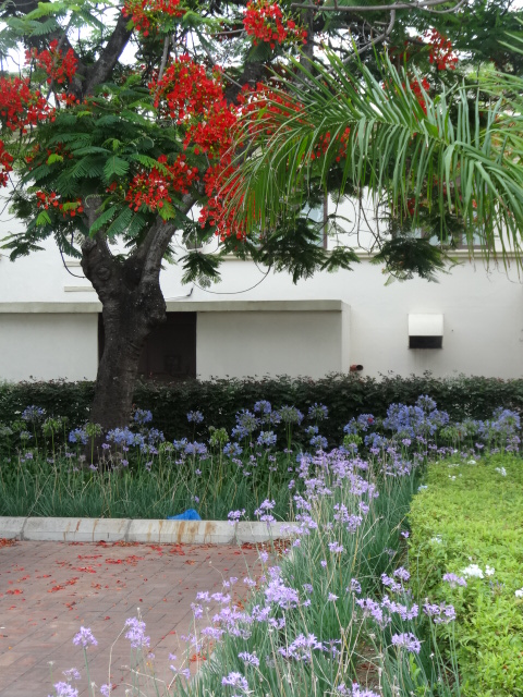 In the gardens of the Polana