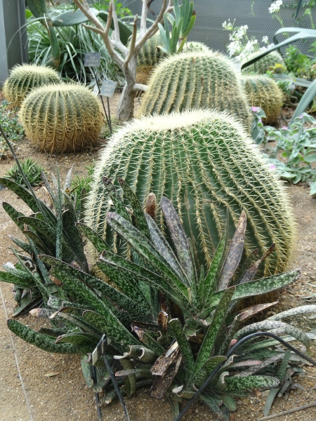 Botanic Gardens Oxford