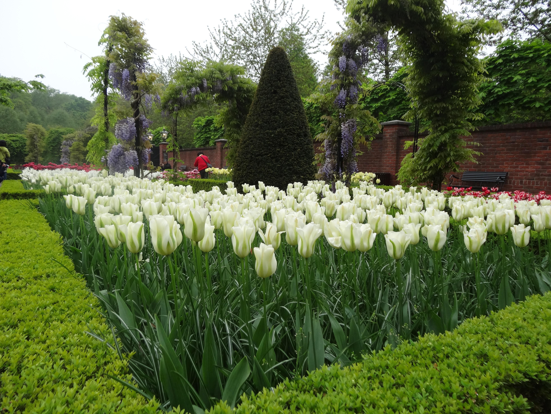Clusius and the history of tulips at keukenhof jardin for Jardin keukenhof 2015