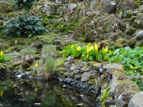 The waterfall area; the small pools are surrounded by Caltha palustris and Lysichiton americanus.