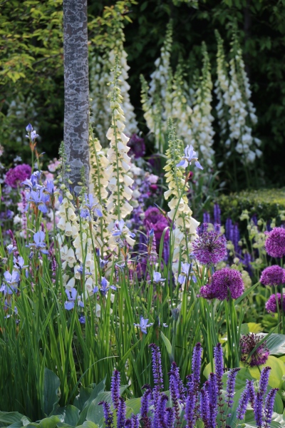 A beautiful pairing of Alliums and Digitalis