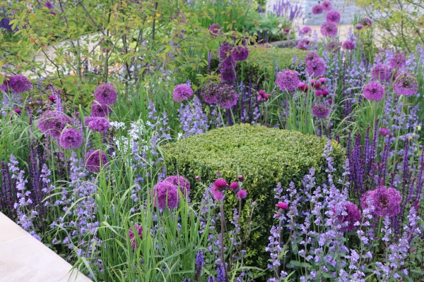 Salvias and Alliums contrasting with box cubes