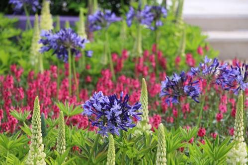 The towering spires of Lupins