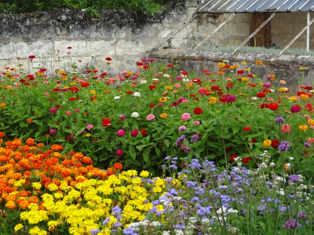 A colourful corner of the kitchen garden, Chenonceau.
