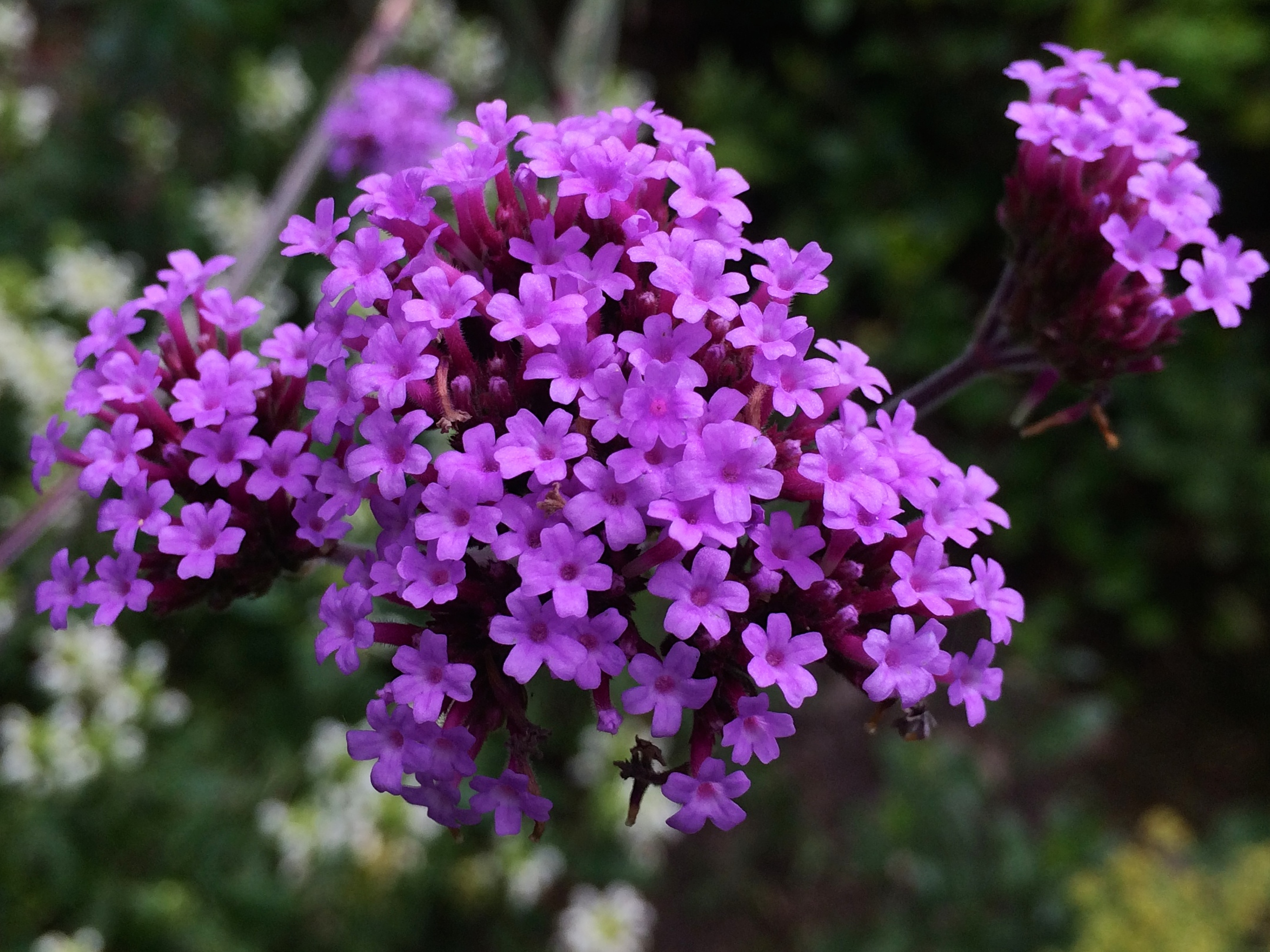 Top 10 Hardworking Plants For Herbaceous Borders Jardin
